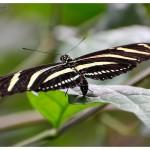 Schmetterlinge im Tropenhaus