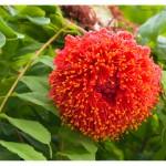 Blüte im Botanischer Garten von Tulpe-Production.de