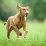 Hundefotos von Leipziger Fotograf