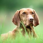 Hundefotos im Wald