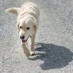 Wandern mit Hund Bad Hofgastein
