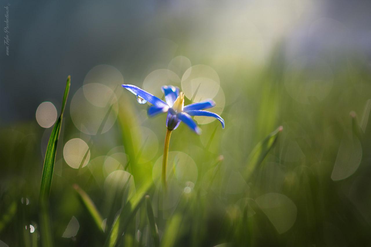 Fotoshooting im Frühling - Springtime 3