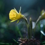 Fotoshooting im Frühling - Springtime 4