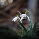Fotoshooting im Frühling - Springtime 6