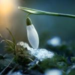 Fotoshooting im Frühling - Springtime 5