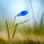 Fotoshooting im Frühling - Springtime 7