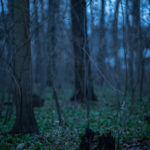 besondere Kinderportraits im Wald