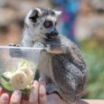 Affenfütterung Amazonas Park Kreta