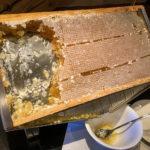frischer Honig aus der Wabe - Frühstück Berghof Söll