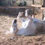 Pferde vom Reitausflug iin Kreta