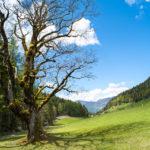 Fotos von Söll - Naturwanderweg Hintersteiner See