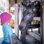 Reitausflug für Kinder in Kreta