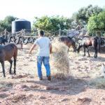 Reiterurlaub auf Kreta