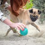 Fotoshooting mit Hund in Leipzig